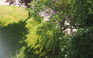 Jardin, Verdure, Parc extérieur (Alicia Bonnin, Psychologue et Neuropsychologue, Tours - La Riche)